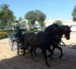 Carriage training at the Escuela Real, Jerez