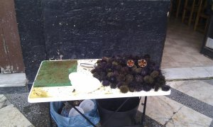 See urchins sold in the street in Cadiz