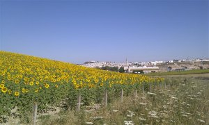 Lebrija from the sunflower fields